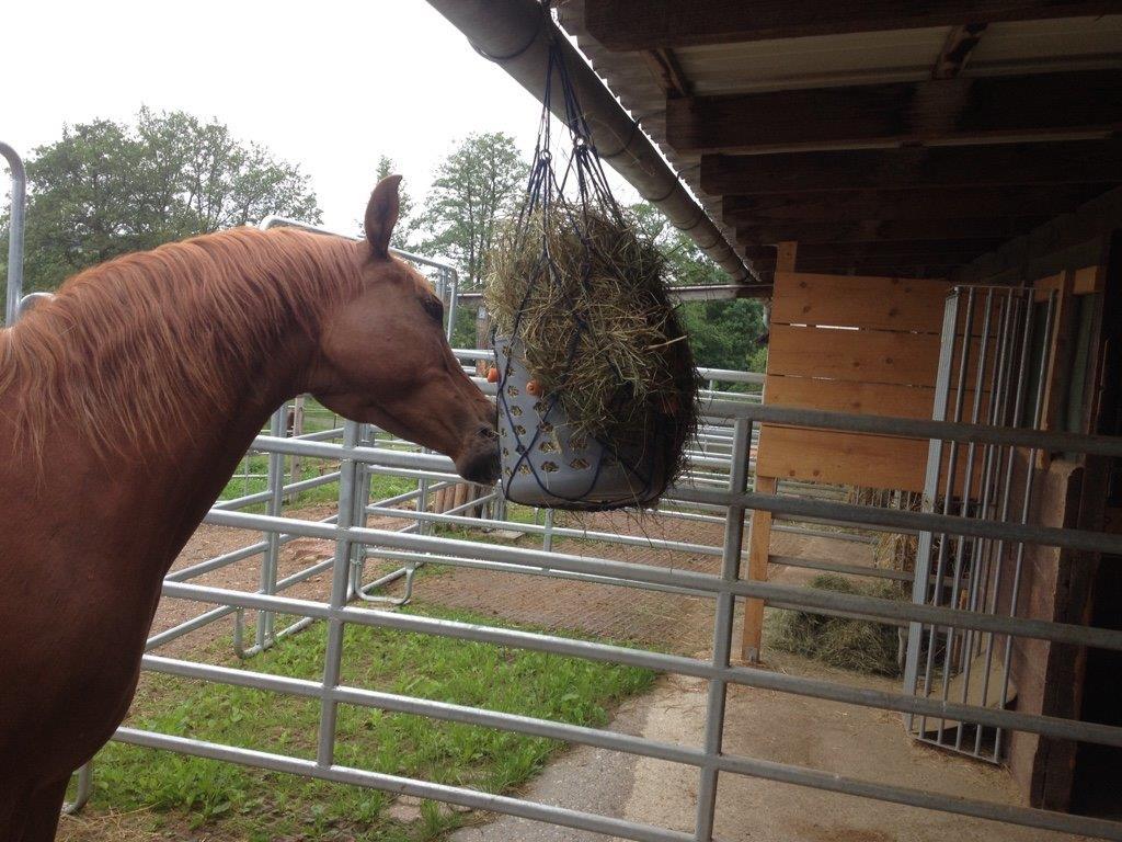 Karottenkörbchen