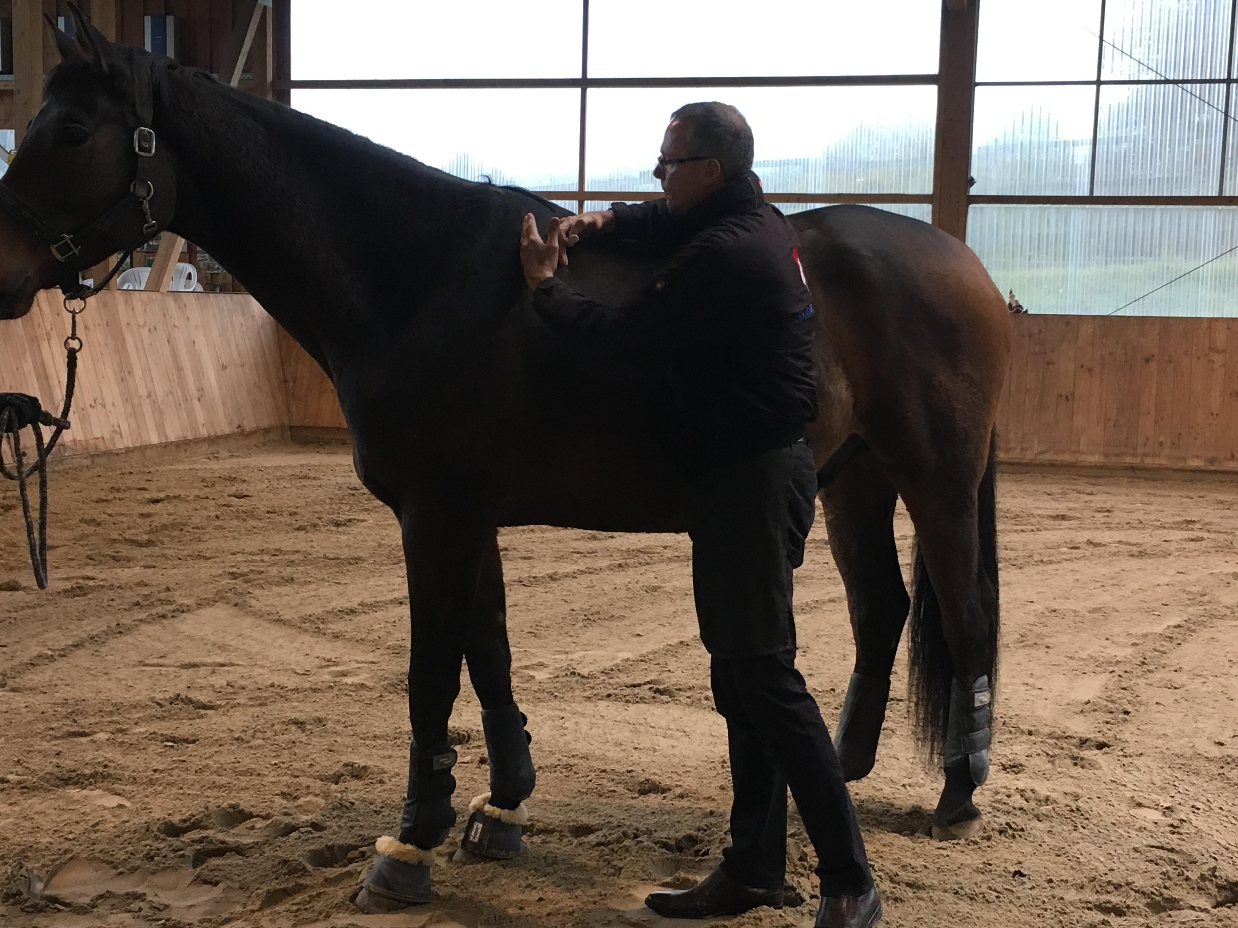 Diese Gurte Schnüren Dem Pferd Die Luft Ab, Da Sie Beim Ausatmen Immer  Enger Werden! Daher Nennt Man Sie Auch Pyton Gurteu2026